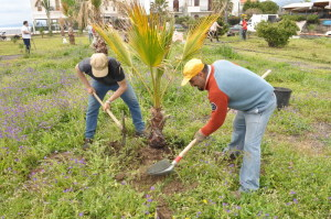 Piantumazione di una palma da parte di volontari nel Parco area Nike