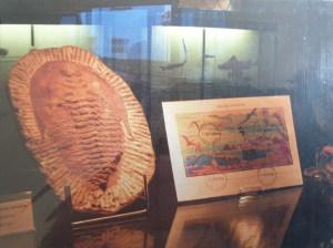 Un fossile e francobolli dedicati ad animali preistorici  esposti in una teca del museo