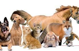 La giornata della benedizione degli animali